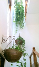More hanging plant love.