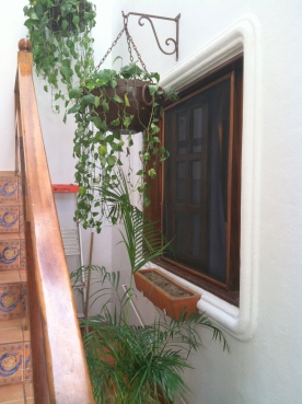 The window to my room at Hotelito los Suenos. Love the hanging plants!